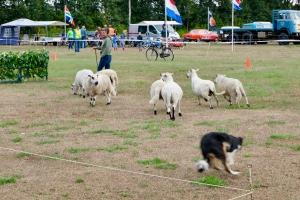 Oogstfeest Ostwedde 2018 - 20 van 24